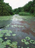 Vegetación flotante en un manglar de la Ciénaga Grande de Santa Marta.