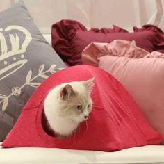 Diy Cat Tent, Diy Tent, Dyi Cat Bed, Tent Craft, Fun Crafts, Diy And Crafts, Old T Shirts, Cat Furniture, Furniture Stores