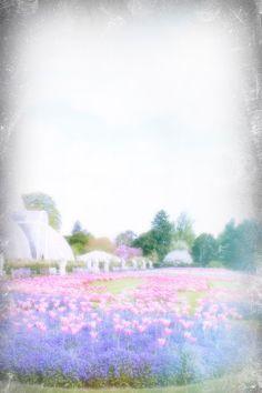 kew gardens #kewgardens #richmond #tulips