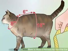 Image titled Make a Harness for Your Fat Cat Step 1