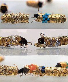Caddisfly larvae (Trichoptera) build protective cases using materials found in their environment. Artist Hubert Duprat supplied them with gold leaf and precious stones. This is what they created..
