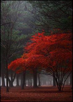 искусство, осень, красиво, красота, колорит, темно, падение, лес, пейзаж, листья, таинственное, природа, приятно, живопись, фото, фотография, красный, дерево, деревья, деверья