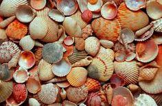 Image result for Seashells
