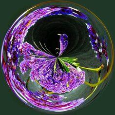 hummingbird bubble