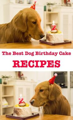 Homemade Dog cake Recipe: Dog Birthday Cake Recipes For Your Pups Special Day (.) This easy Homemade Dog Cake Recipe has a tasty blend of peanut butter honey and carrots your dog will love it! how to make the best dog birthday cake recipes Cake Dog, Puppy Cake, Dog Cakes, Dog Cake Recipes, Dog Food Recipes, Food Tips, Dog Friendly Cake, Puppy Birthday, Birthday Cakes For Dogs