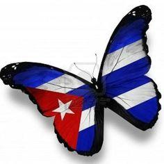 Cuban-flag butterfly