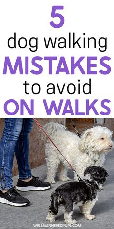 Dog walking tips every dog parent should know! Read the top 5 dog walking mistakes to avoid on walks.