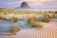 Purple Haze - Another grassy dunescape from my most recent trip to Cannon Beach with my family. I loved the soft sidelight on the haystack and was amazed that my favorite section of sand in these dunes also happened to be the only one devoid of footprints this late in the day.