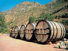 Wine Barrels in La Rioja, Spain