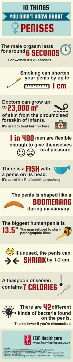 Penis Hakkında Bilmediğiniz Veya Bilmek İstemeyeceğiniz 10 Şey