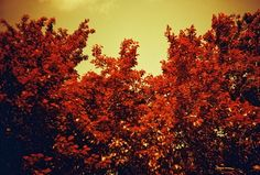 Redscale and Russia Day  #Lomography