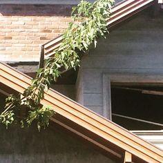 """sempre um toque da natureza"" #obra #executandosonhos #arquitetura #ahessarquitetura #serragaucha"