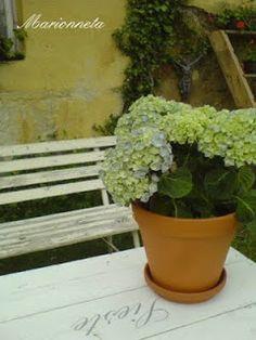 Marionneta: Jen tak... Herbs, Plants, Herb, Plant, Planets, Medicinal Plants