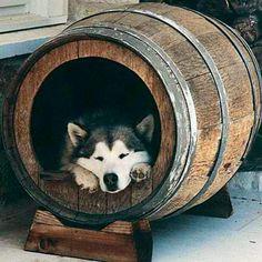 Turn a wine barrel into a dog house
