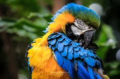 """The colors of nature """"One"""" by Tommy Gamboa Flores"""