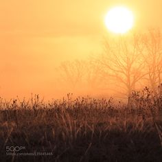 Mostly orange by GorazdKranjc