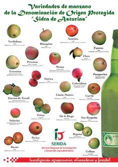 CATA CONSEJO REGULADOR SIDRA DE ASTURIAS Asturias Spain, Places In Spain, Cider Making, Balearic Islands, Fruit, Cata, Food, Paraiso Natural, Apples