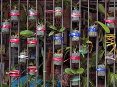 Hong Kong Flora is a continuous exploration of Wolf's favorite theme of human intervention on street life. This time Wolf zooms into the green bits found in the back alleys.