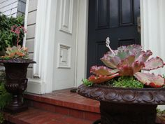 SUCCULENTS AT HOME in classic urns with rustic finish lend contrast to elegant Edwardian. RS McDANNELL