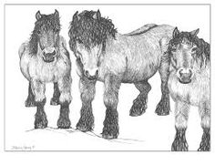 Image result for icelandic horse pen and ink