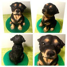 cake dog