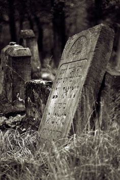 Abandoned Jewish cemetery in Otwock (This is exactly like the cemetery in the beginning of My Nazi)