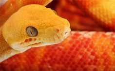 30+ Breathtaking Snake Wallpaper for Free Download | Naldz Graphics