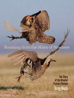 New bird book - Booming from the Mists of Nowhere: The Story of the Greater Prairie-Chicken, by Greg Hoch
