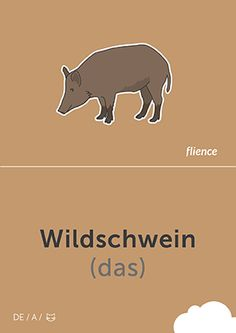 Wildschwein #CardFly #flience #animals #german #education #flashcard #language