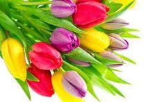 tavaszi virág névnap és születésnap tavasz vízcsepp virágcsokor és dekoráció tulipán
