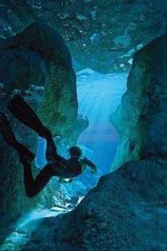 Underwater Caves, Underwater Life, Underwater Photos, Underwater Photography, Cave Diving, Scuba Diving, Ocean Life, Sea World, Belle Photo