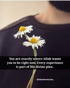 You are exactly where Allah wants you to be right now. Every experience is part of His divine plan.