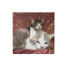 Comfy Kitties #Tiles!  #Cute #kittens galore are in my #zazzle #store!  http://www.zazzle.com/conquestkitty*