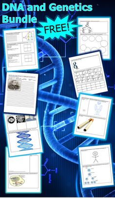 This is a FREE 14 page homework or classwork bundle that explores DNA, Cell Division (Mitosis), Cancer and the Dangers of Smoking, Meiosis, and Genetics. Answers are provided. -Enjoy! Science from Murf LLC