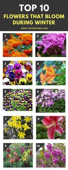 WINTER FLOWERS 11/1/17