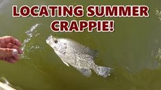 How To Locate Crappie In The Summer - Fishing Brush Piles Wi.-How To Locate Crappie In The Summer – Fishing Brush Piles With Weedless Jig Heads How To Locate Crappie In The Summer – Brush Piles With Weedless … - Crappie Lures, Crappie Fishing Tips, Gone Fishing, Carp Fishing, Best Fishing, Saltwater Fishing, Kayak Fishing, Fishing Tricks, Fishing Rods