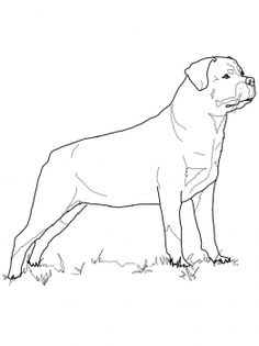 113 Best favorite Dog Colouring pages images in 2014 Dog