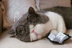 59 Trendy Ideas cats and kittens sleeping funny I Love Cats, Crazy Cats, Cool Cats, Cute Funny Animals, Funny Cats, Kittens Cutest, Cats And Kittens, Sleeping Kitten, Exotic Shorthair