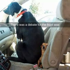 Dog memes of the day. Here is the compilation of top 40 funny dog memes that will make you laugh all damn day. Don't forget to share. Funny Animals With Captions, Funny Animal Memes, Dog Memes, Cute Funny Animals, Funny Animal Pictures, Funny Cute, Funny Memes, Animal Quotes, Ironic Memes