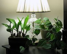 1000 Images About INDOOR PLANTS LIGHTING On Pinterest Indoor Plant L