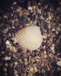 Deep in the sea #sea #denizkabuğu
