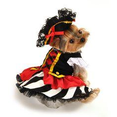 like i said before but how cute is she!  Pirate Girl Dog Costume