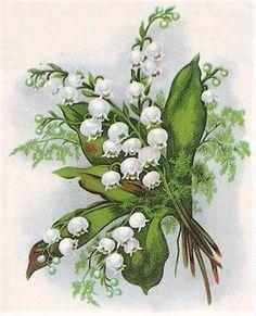 (3) Gallery.ru / Фото #163 - 10 - Fyyfvbwrtdbx1957 Lily Of The Valley, Vintage Cards, Vintage Flowers, Cardmaking, Decoupage, Clip Art, Rose, Drawings, Plants