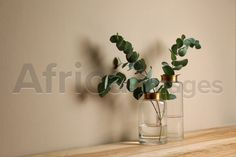 Beautiful eucalyptus branches in glass vases on wooden table against beige background. Space for text. Buy Creativity & Imagination. Take a look at what the world's best photographers have to offer at africa-images.com Eucalyptus Branches, Beige Background, Best Photographers, Wooden Tables, Vases, Imagination, Glass Vase, Creativity, Africa