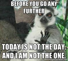 Not Today Lemur - Before you go any further Today is not the day. And I am not the one.