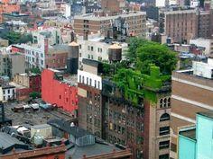 An intensive roof garden in Manhattan.