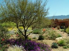 You don't need to sacrifice design and color to create a sustainable garden - desert landscape