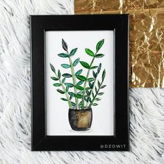 It is time for another plant! All my painting will be able to buy on my website. 100 Day Challenge, 100th Day, Stay Tuned, Potted Plants, Watercolor Paintings, My Arts, Website, Rose, Creative