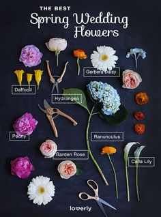 Certain flowers are better used in the spring season. Loverly explains what they are below. Via loverly