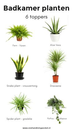 Plants in the bathroom? These are 6 toppers - One Hand in my Pocket - Plants in the bathroom? These are 6 toppers – One Hand in my Pocket - Bathroom Plants, Bathroom Toilets, Bathroom Flowers, Bathrooms, Wc Retro, Spider Plants, Modern Bedroom Design, Snake Plant, Bathroom Inspiration